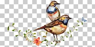 Watercolor Painting Drawing Bird PNG