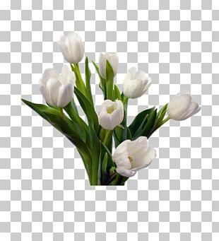 Tulip Flower Bouquet White Cut Flowers PNG