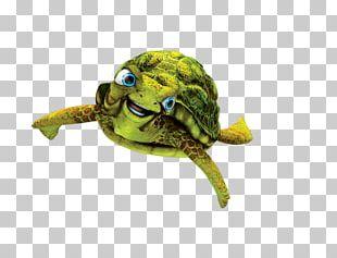 Box Turtle Nerissa Sea Turtle Tortoise PNG