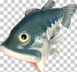 Bony Fishes Oily Fish PNG