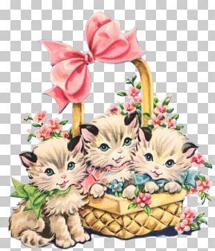 Kitten Cat PNG