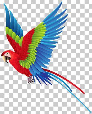 Palmitos Park The Parrot Place Bird Amazon Parrot True Parrot PNG