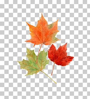 Autumn Leaves Maple Leaf Autumn Leaf Color Watercolor Painting PNG