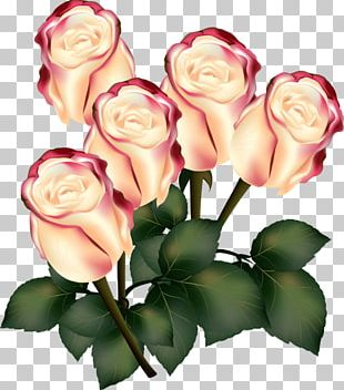 Rose Flower Photography PNG
