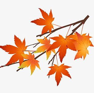Autumn Maple Leaves PNG