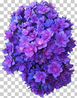 French Hydrangea Flower Purple Rose Violet PNG