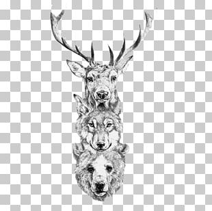 Red Deer Bear Gray Wolf Elk PNG