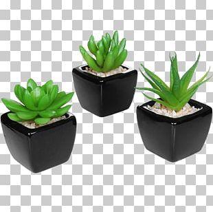 Succulent Plant Flowerpot Ceramic Artificial Flower PNG