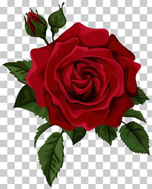 Rose Flower Red Euclidean PNG