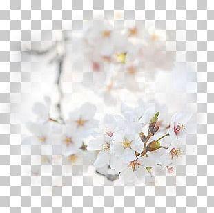Blossom Flower Bouquet Honey Desktop PNG
