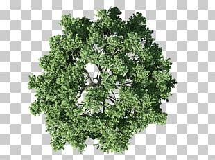 Tree Plan Shrub PNG