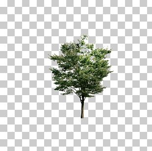 Tree Euclidean Resource PNG