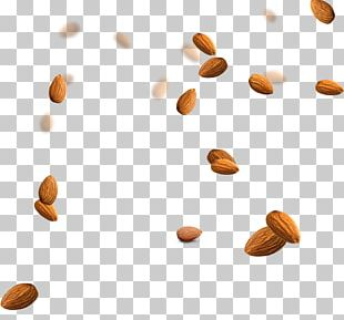 Almond Nucule Icon PNG