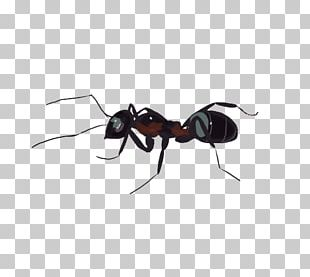 Ant Insect Wing Insect Wing Membrane PNG