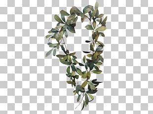 Bay Laurel Garland Laurel Wreath Leaf Branch PNG
