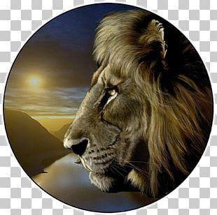 Lionhead Rabbit Tiger Roar Cougar PNG