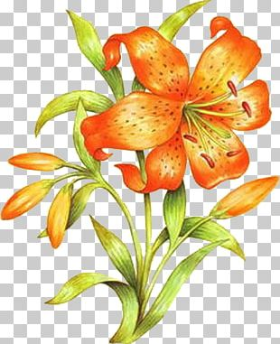 Orange Lily Floral Design Drawing Flower PNG