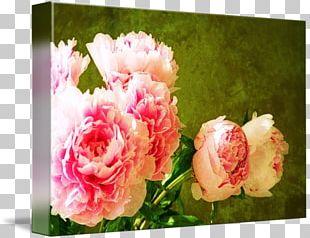 Garden Roses Cabbage Rose Floral Design Cut Flowers Flower Bouquet PNG