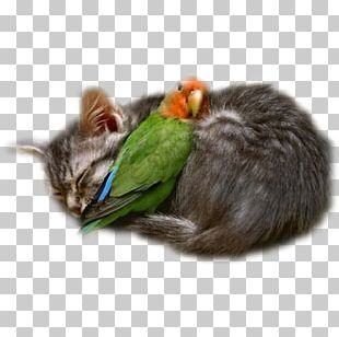 Interspecies Friendship Love Cat Intimate Relationship PNG