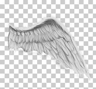 Angel Wing Painting Drawing PNG