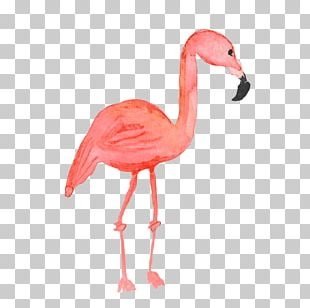 Flamingos Common Ostrich Bird PNG