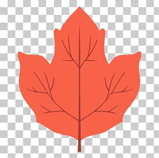 Maple Leaf Red Maple Petal Autumn PNG