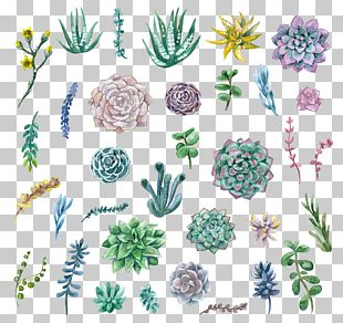 Watercolor Painting Succulent Plant PNG