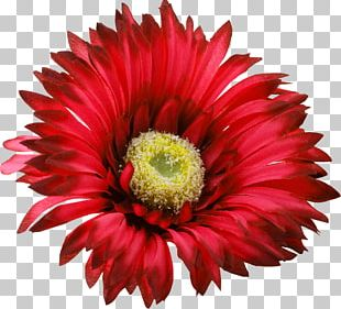 Flower Red PNG