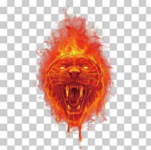 Tiger Fire Euclidean PNG