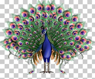 Krishna Animation Peafowl PNG