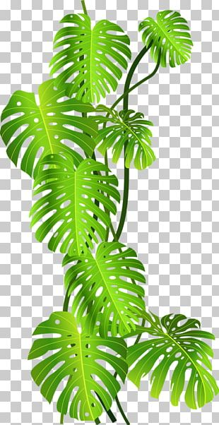 Tropics Jungle Tropical Rainforest PNG