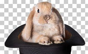 Rabbit Top Hat Magic Stock Photography PNG