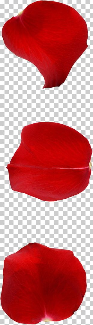 Petal Valentines Day Qixi Festival Tanabata Rose PNG