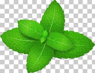 Mentha Spicata Peppermint Herb Leaf PNG