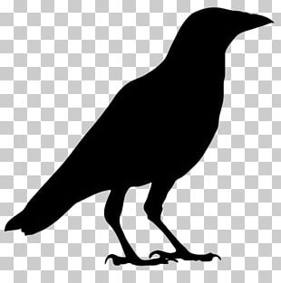 American Crow Common Raven Bird Carrion Crow PNG