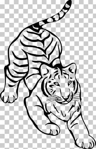 Tiger Line Art Drawing PNG