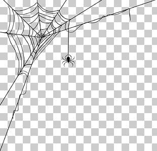 Spider Web World Wide Web Spider Silk PNG