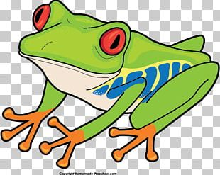 Red-eyed Tree Frog Australian Green Tree Frog PNG