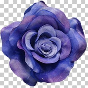 Flower Blue Rose Petal PNG