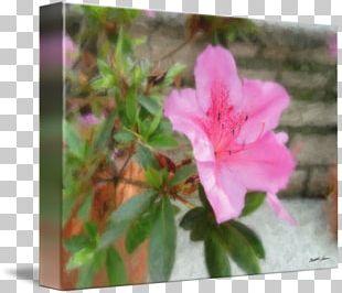 Azalea Pink M Petal RTV Pink Family PNG