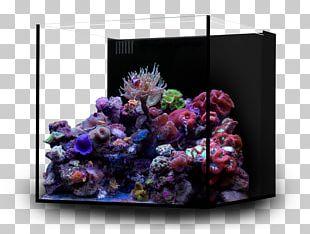 Reef Aquarium Nano Aquarium Nano Reef Coral PNG