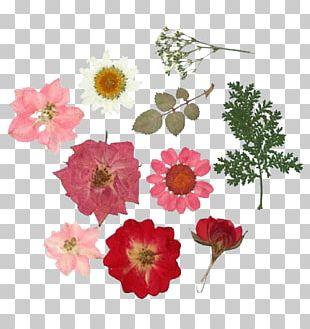 Pressed Flower Craft Paper Floral Design Flower Bouquet PNG