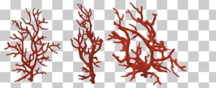 Red Coral Coral Reef Alcyonacea PNG