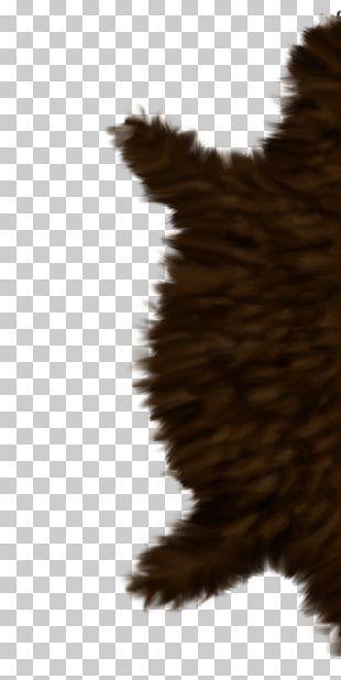 Beak Feather Snout Fur Tail PNG