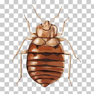 Bed Bug Illustration PNG