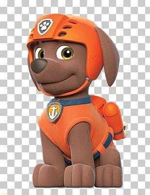 Zuma Labrador Retriever Puppy PNG