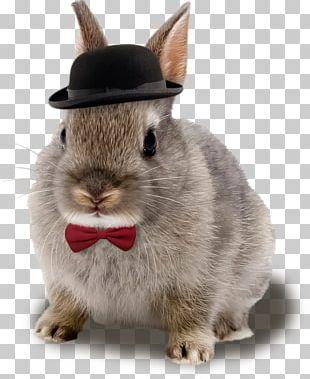 Netherland Dwarf Rabbit Domestic Rabbit Breed PNG