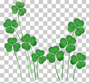 Saint Patrick's Day Shamrock Leprechaun Irish People PNG