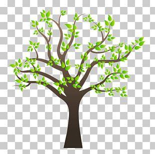 Family Tree Family Tree PNG