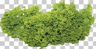 Portable Network Graphics Leaf Vegetable Salad Growing Vegetables And Herbs PNG